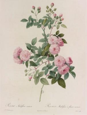 roses_Vol2